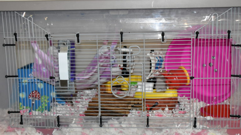 Christmas Tree Bin Cage.Cages Happy Paws Hamsters
