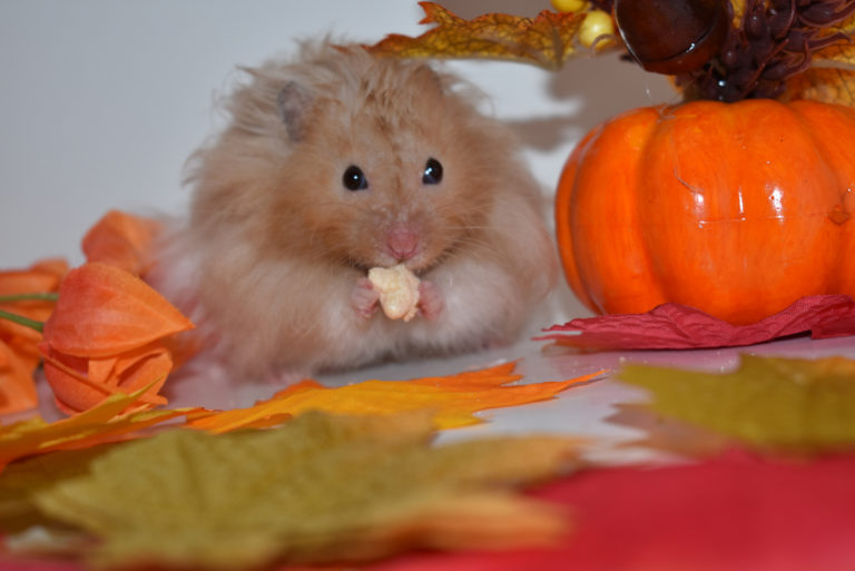 Proper Hamster Care - Happy Paws Hamsters