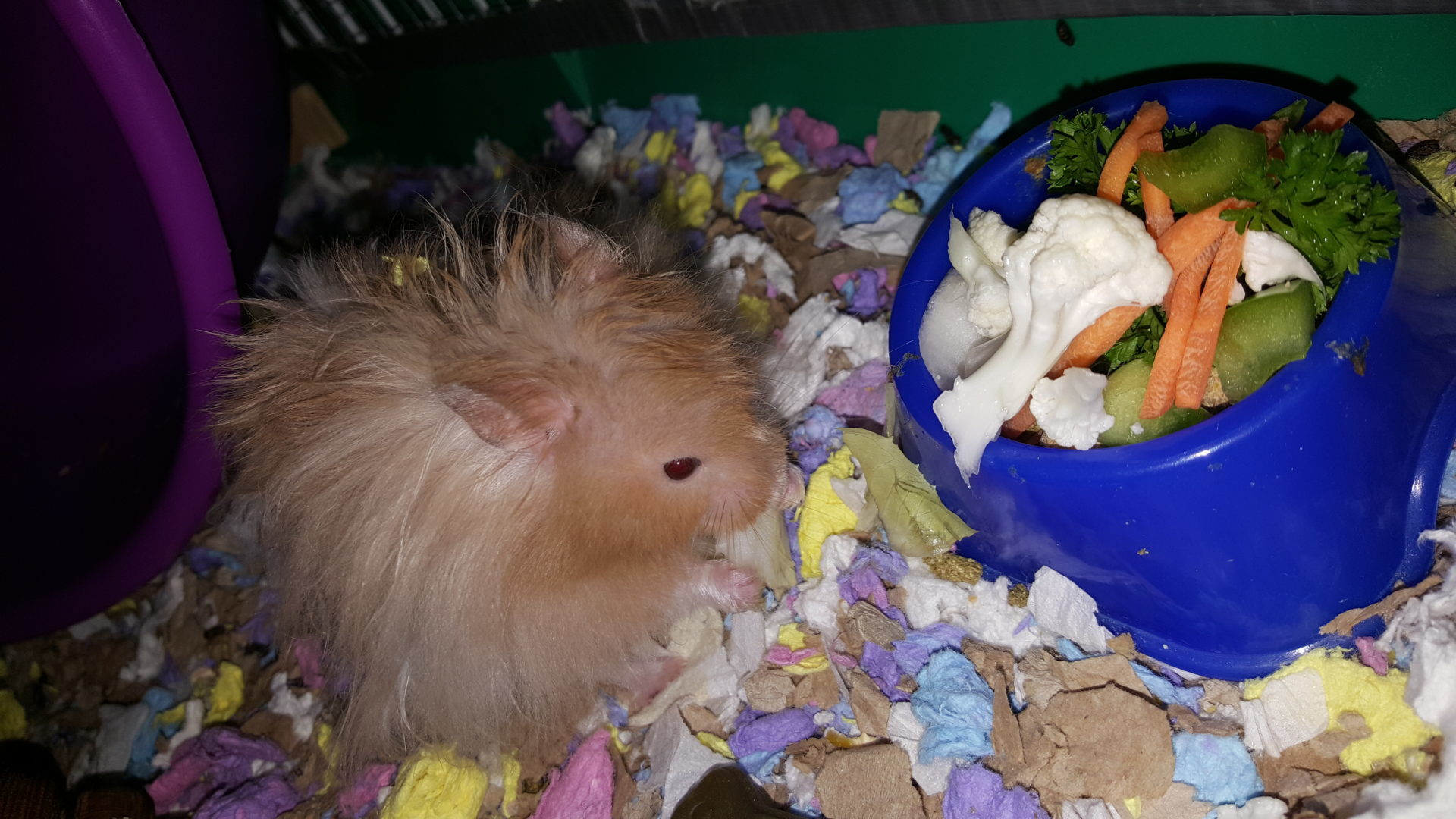 Food Amp Nutrition Happy Paws Hamsters